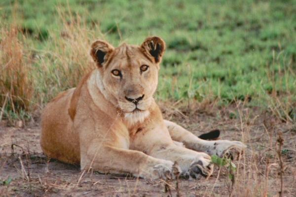 Het reisverslag van onze reis naar oeganda - Tafel leeuw ...